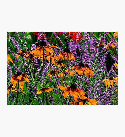 Full Of Flowers Photographic Print