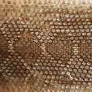 Rattlesnake Skin by Susan Russell
