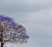 Just a Jacaranda - Near Boonah Qld Australia Sticker