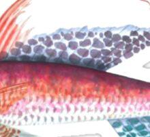 Sail fish Sticker