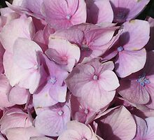 Light Purple Hydrangea by art2plunder