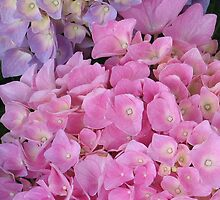 Hydrangea Mix by art2plunder