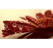 Red Rain Photographic Print