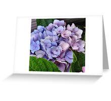 Lavander and Blue Hydrangeas Greeting Card