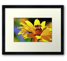 Ode to Summer Framed Print