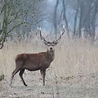 Red Deer  by DutchLumix