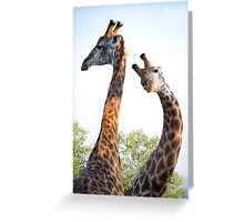 Walking with Giraffes - South Africa Greeting Card