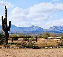 Cactus In Arizona by Elizabeth  Lilja