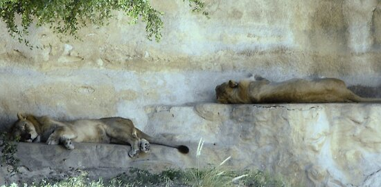 Trundle Bed: Just Lion Around by Susan Russell