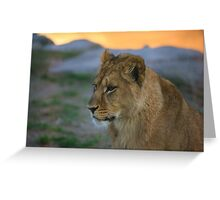 African Lion Cub Greeting Card