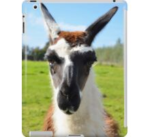 Humorous Close-up of Common Ccara Llama Face iPad Case/Skin