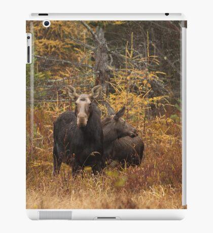 Moose - Algonquin Park, Canada iPad Case/Skin