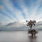 Garry's Tree Wellington Pt Qld Australia by Beth  Wode
