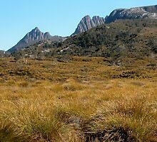 Cradle Mountain with Button Grass, Tasmania, Australia. by kaysharp