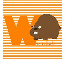 w for wombat Photographic Print