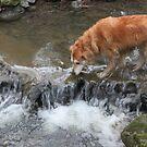 saz walking on peasholm river by xxnatbxx