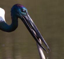 Stork vs Eel Sticker
