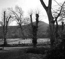 falkland estate by sparkieroy