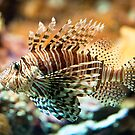 red lionfish by peterwey
