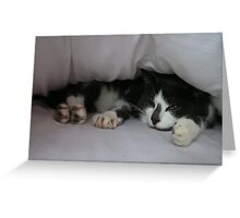 Bed Cat Greeting Card
