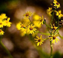 Simple Yet Beautiful Weeds by SESE
