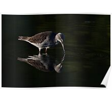 Greater Yellowlegs reflects Poster