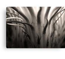Cactus Bloom in Sepia Canvas Print