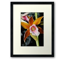 orchid #6 Framed Print