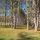 Beaver Creek State Park by Jack Ryan