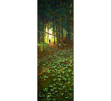 White Bear Forest Nature Trail Photographic Print