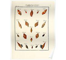 Neues systematisches Conchylien-Cabinet - 254 Poster