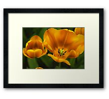 Golden summer floral Framed Print