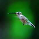 Tongue and Cheek - Hummingbird by Jim Cumming