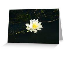 White Water Lily (Nymphaea odorata) Greeting Card