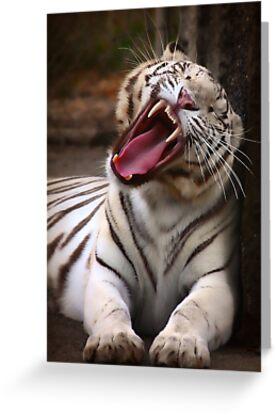 The Big Yawn by Anne McKinnell