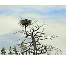 Eagle's Nest in Montana Photographic Print