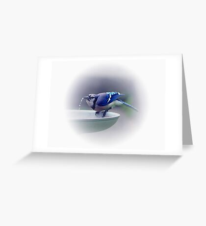 *BLUE JAY DRINKING WATER* Greeting Card