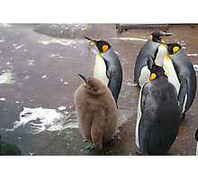 Edinburgh Zoo: baby penguin Photographic Print