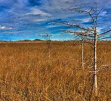 Everglades Winter by Bill Wetmore