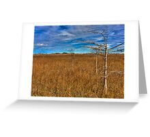 Everglades Winter Greeting Card