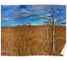 Everglades Winter Poster