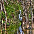 Lurking in the Swamp by njordphoto