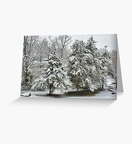 Snow Covered Cedars Greeting Card