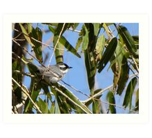 Black-throated Gray Warbler ~ Male Art Print