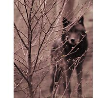 Watched! Photographic Print