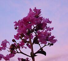 Myrtle on purple by mowieb
