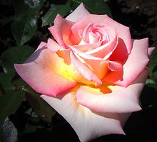 Romance by jules572