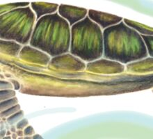 Green Turtle (Chelonia mydas) Sticker