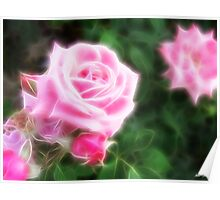 Pink Roses in Anzures 1 Angelic Poster