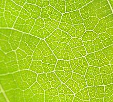 Leaf by theboxlab